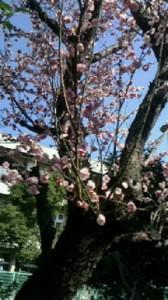 春の訪れ①