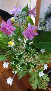我が家の花②