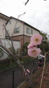 春の息吹③