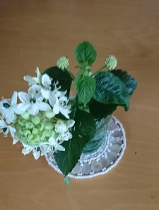 今日の花(Oct.12)