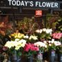 先週はダリア・今週は薔薇フェアです…PartⅡ